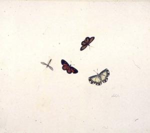 Drie vlinders en een insekt