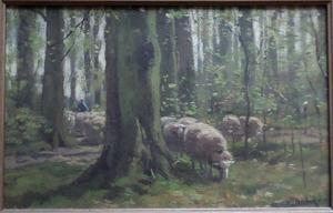 Schaapskudde  in een bos