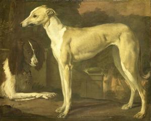 Portret van een hazewindhond en een patrijshond
