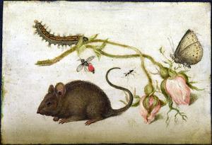 Een muis, twee rozen en insecten