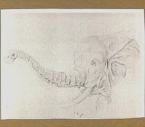 Olifantenkop