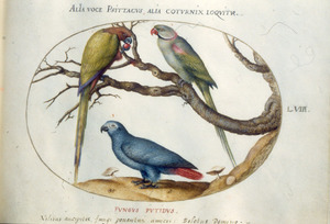 Drie papegaaien, waarvan twee op een tak