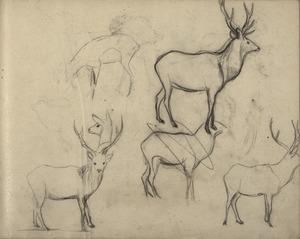 Schetsboekblad met schetsen van een hert