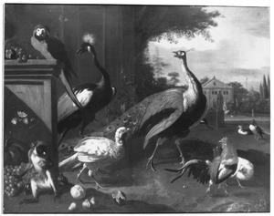 Een pauw met andere vogels en een aap in een park
