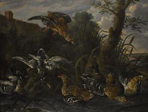 Eenden in een vijver