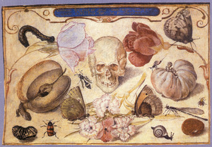 Vanitas (stilleven met schedel, vruchten, bloemen en insecten)