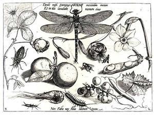 Libel, bloemen, aalbessen, insecten en een garnaal