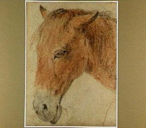 Hoofd van een paard