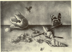 Stilleven van bloemen, schelpen en insekten