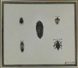 Vier insecten en een pop (?)