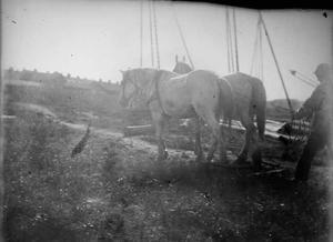 Twee trekpaarden aan de Cruquiusweg te Amsterdam