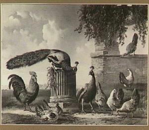 Pauwen en divers ander gevogelte bij een ruïne