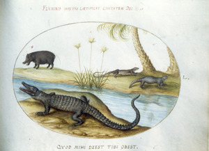 Krokodil, twee leguanen en een zwijn