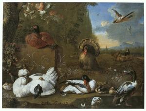 Diverse vogels in een landschap