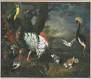Kalkoen, papegaai en andere vogels in een landschap met ruïne