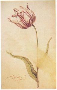 Tulp (Viceroij)