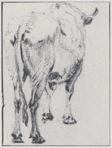 Staande stier van de achterzijde