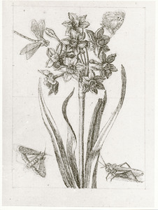 Tazetnarcis, huismoeder, libel, wrattenbijter en vlinder