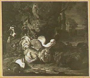 Hoenderhof met hond die op de kippen jaagt, midden boven een papegaai