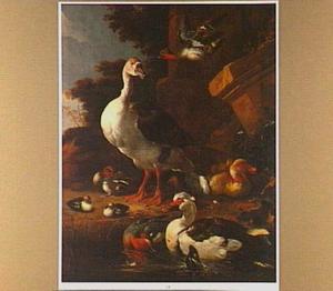 Exotische watervogels aan de rand van een vijver bij een ruïne
