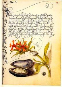 Brandende liefde, mossel en lieveheersbeestje