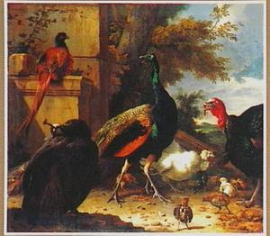 Siervogels en kuikens bij een ruïne