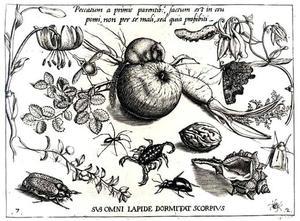 Eekhoorn, appel, walnoot, schelp, bloemen en insecten