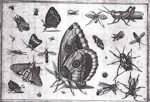 Vlinder, sprinkhaan en andere insecten