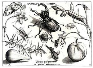 Vliegend hert, vis, bloemen, een appel, peer en andere insecten