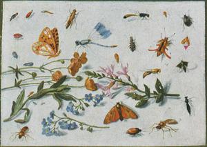Studie van insecten rondom diverse twijgjes van planten o.a. een boterbloem en vergeet-mij-nietje, op een witte ondergrond