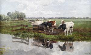 Weidelandschap met vee met stadsvergezicht
