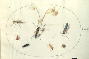Akelei en zeven insecten, voornamelijk kevers