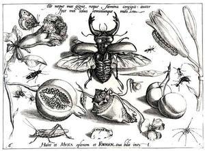 Vliegend hert, sprinkhaan en andere insecten, granaatappel, kersen, bloemen en een schelp