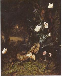 Slang, vlinders, madeliefjes en een distel in een boslandschap