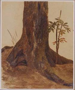 Stronk van een eikenboom