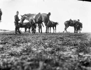 Gezicht op militairen met paarden tijdens een militaire manoeuvre