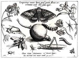 Mot, sprinkhaan, rups en andere insecten, granaatappel en twee bloemen