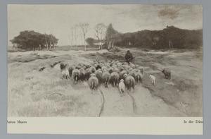 Kudde schapen op de heide