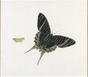 Vlinder en mot