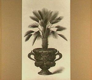 Palmboompje in een pot (chameriphis sive palma dactijlifera)