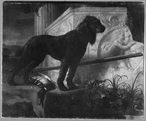 Grote zwarte jachthond voor jachtbuit bij een ruïne