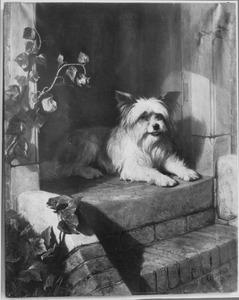 Hond liggend op trap