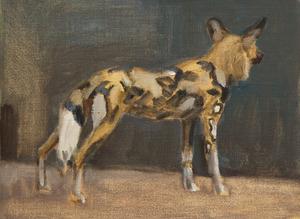 Staande wilde hond, van achteren gezien