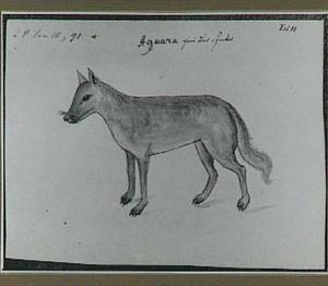 Aguara (zoogdier)