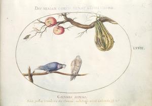 Kalebas, appels, zangvogel en twee duiven