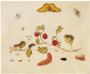 Tak van de meidoorn en verschillende metamorfosen, rups en tropische vlinder