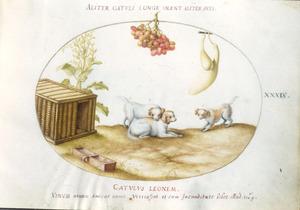 Drie puppies, daarboven een druiventros en een kalebas. Links daarvan een mand, struik en drinkbak