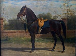 Woyko, rijpaard van Koningin Wilhelmina