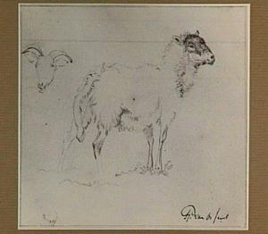 Studie van schapen