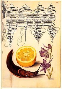 Ridderspoor, grote wegslak en halve sinaasappel